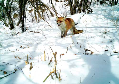 我看见原生态的野生动物