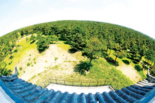 根据第八次全国森林资源清查,森林面积达到了2.08亿公顷,森林蓄积151.