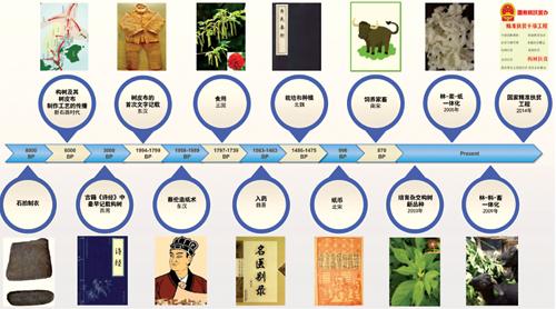 中国科学家破译蔡伦造纸原料植物构树基因组